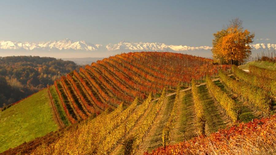 Langhe, Roero e Monferrato: Candidatura a Patrimonio dell'Unesco